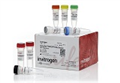 NucBlue® Live ReadyProbes® Reagent